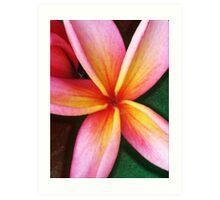 Pink and Yellow Plumeria Art Print