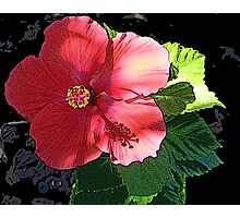Posterized Red Hibiscus Photographic Print