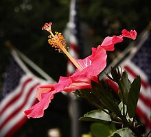 Hibiscus for the Fallen by AnnDixon