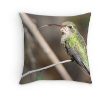 Hummingbird ~ Broad-billed (Female)  Throw Pillow