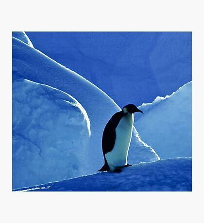 Emperor Penguin, Antarctica Photographic Print
