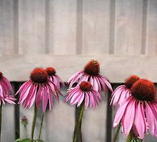 Coneflower Couples by ninasilver