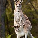 Australian Wildlife by Blue Gum Pictures