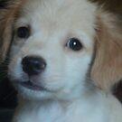 lil puppy by Loretta Marvin