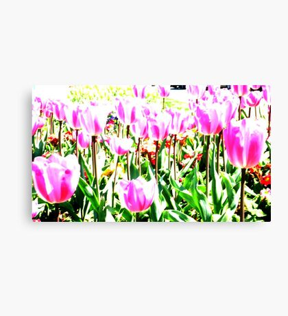 Twinkling Tulips  Canvas Print