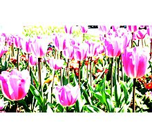 Twinkling Tulips  Photographic Print