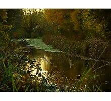 Autumn in Surrey Photographic Print
