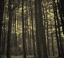 Woodland Hollow by sfeole