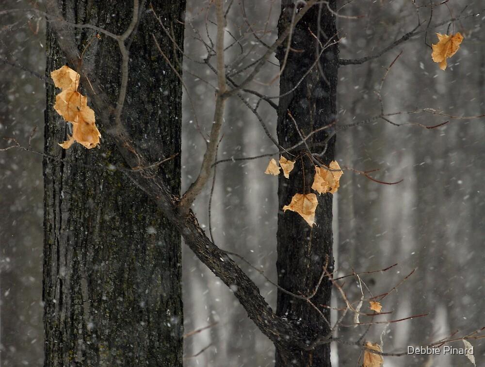 Snowing in the Woods, Dunrobin Ontario by Debbie Pinard