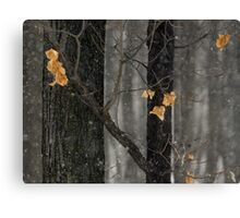 Snowing in the Woods, Dunrobin Ontario Canvas Print