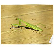 Praying Mantis on front porch, N.W. Arkansas  Poster