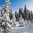 Winter Forest by Michael Beckett