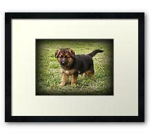 Black & Tan Puppy Framed Print