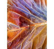 Winter Leaf II Photographic Print