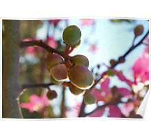 Tree flower pods Poster