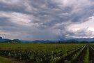 Storm over Sugar, Murwillumbah NSW by Odille Esmonde-Morgan