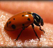 Handheld ladybug by Angie O'Connor