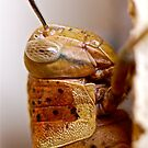 Cricket Close up # 2 by Penny Smith