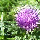 Thistle Flower by Lorrie Davis
