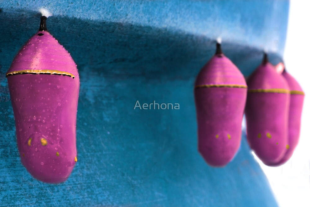 Royal Pink by Aerhona
