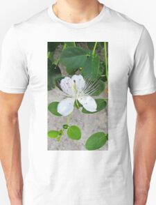 White flower of capers growing on a wall T-Shirt