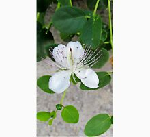 White flower of capers growing on a wall Unisex T-Shirt