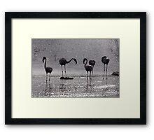 Flamingos at the Geysir of Lake Bogoria Framed Print