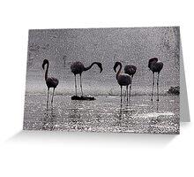 Flamingos at the Geysir of Lake Bogoria Greeting Card