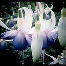 Purple by Lady  Dezine
