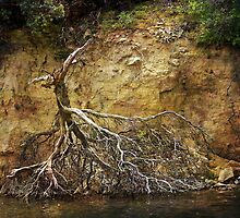 Not Every Tree Survives by CarolM