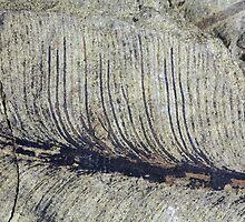 Fragile Fossil Plant Leaf by Zosimus