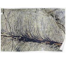 Fragile Fossil Plant Leaf Poster