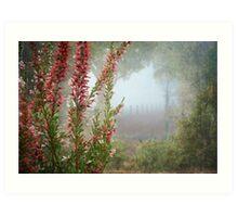 Morning Fog In My Garden (Erica) Art Print