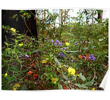 Spring wildflowers in the Karri forests of south-west WA Poster