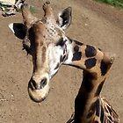 Giraffe from Santa Barbara Zoo by Inga McCullough