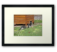 Following the Leader Framed Print