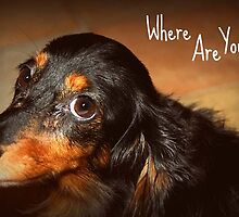 Where are you? by Caroline Hannessen