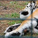 Sleepy Tiger - Zoo Arcachon by Melanie PATRICK