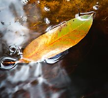 Tannin stained water - Cape Otway by Ben |  Greg