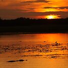 Yellow Water Sunset - Kakadu by Steve Bullock