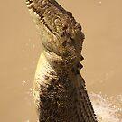Adelaide River - Jumping Crocodile by Steve Bullock