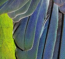 texture and background of colored feathers parrot - plumage by alicara