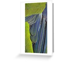 texture and background of colored feathers parrot - plumage Greeting Card