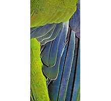 texture and background of colored feathers parrot - plumage Photographic Print