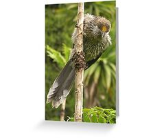 butcher birds Greeting Card