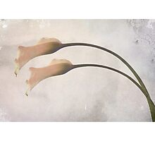 calla Photographic Print