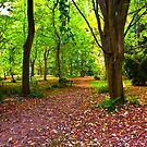 A Leafy Pathway through the Woods by Trevor Kersley