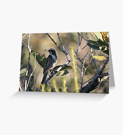 Tawny-crowned Honeyeater Greeting Card