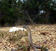 Snake Mimic by EnviroKey