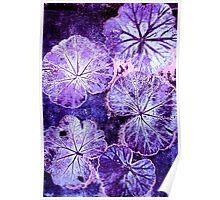November's Garden 3 - Monoprint Poster